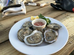 Mobjack Bay Seafood - Oysters & Clams - Gloucester Virginia