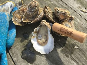 Oysters sold locally - Mobjack Bay Seafood - Gloucester Virginia
